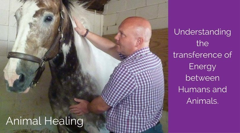 Animal Healing; Understanding the Transference of Energy Between Humans and Animals